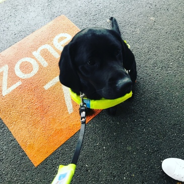 Teal the Guide dog stood on platform 111