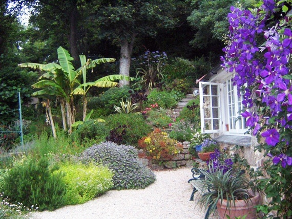 A picture of the exotic  plants grown the in the Gardens of the Bed and Breakfast
